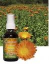 Aceite Calendula Caress 60 ml