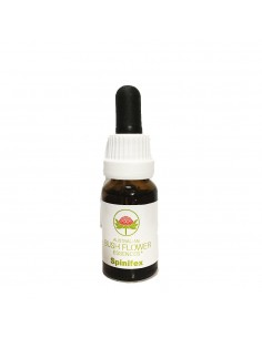 Spinifex - 15 ml