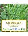 Citronela (Cimbopogon nardus-citronela oil) - Aceite Esencial 10 ml