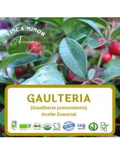 Gaultheria (Gaultheria procumbens) - Aceite Esencial 10 ml