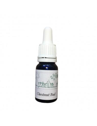 Chestnut Bud (Aesculus hippocastanum)10 ml - El Jardi de Les Essencies
