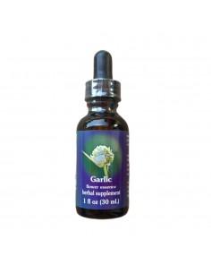 Garlic (Allium sativum) - 30 ml FES